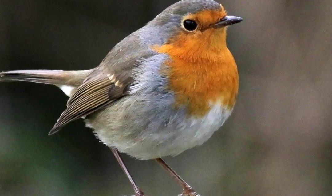 La lezione del passero: consigli per avere fiducia in se stessi.